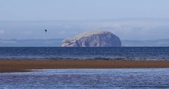 Bass Rock and passing curlew