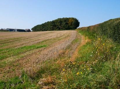 Hedgerow near Westwood Farm