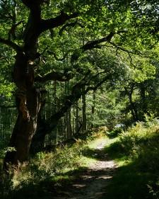 A quieter path