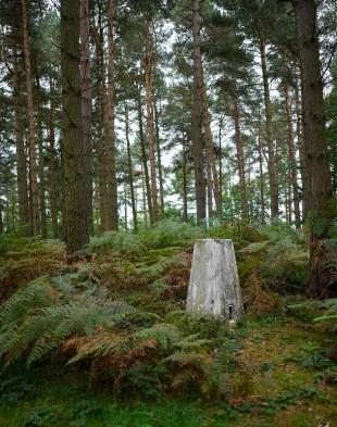 Woodland sentinel