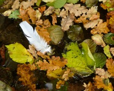 The leaves - and feathers - are falling