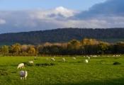 Pastures below the Edge