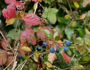 Hedgerow colour
