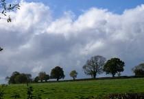 Skyline trees