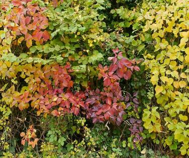 October shades