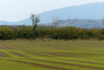 Stripes and the Wrekin