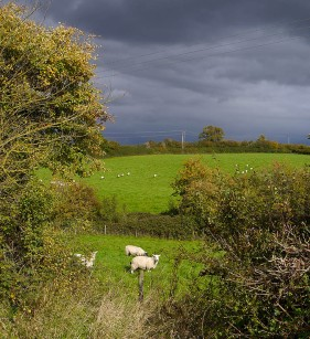 Sheep and dark sky