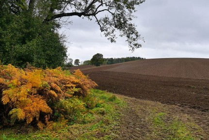 Ploughed and harrowed