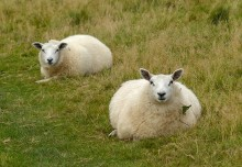 Woolly blobs