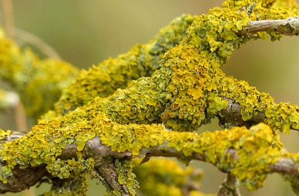 Look closely at the lichen