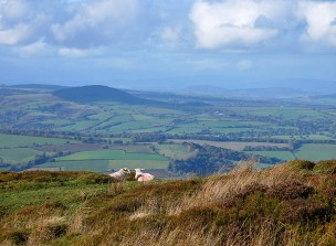 Hill sheep 1