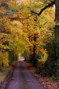 The lane in autumn