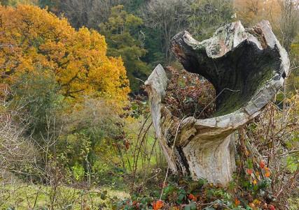 Dead wood in the Fiery Fields