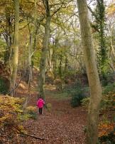 Airy woodland
