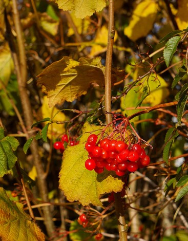 Colour in the hedgerow