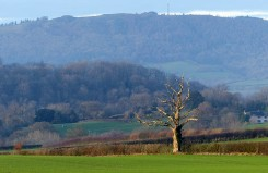 Dead tree and Wrekin