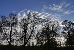 Chestnuts and clouds