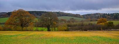 Shirlett woodlands