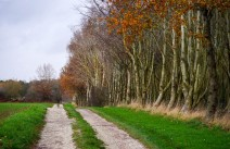 Tree-lined track