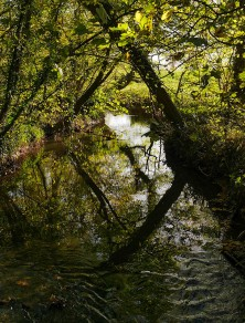Ripples and reflections in Coundmoor Brook