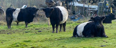 The Belties - dad and lads