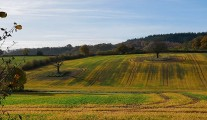 Patterns in the fields
