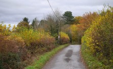 Leaves along the lane