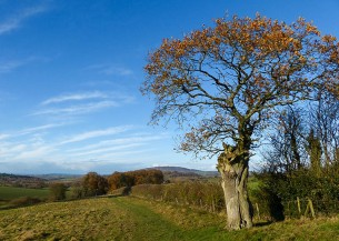 Red leaves and the Wrekin