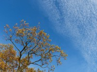 Rice pud sky
