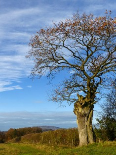 Tree and Wrekin