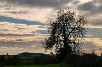 Benthall tree
