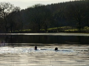 Swimmers! (did I mention the frost?)