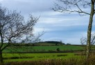 Hilltop woodland