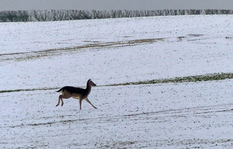 Look, there's a deer...