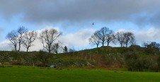 Trees (and buzzard) over Hill End