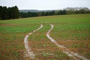 Wet fields