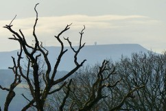 Titterstone Clee and dead tree