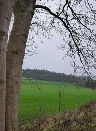 Look up to Chestnut Coppice