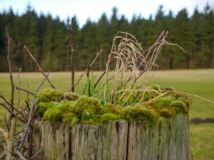 Beside the road: a fertile gatepost