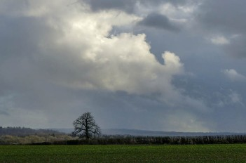 Skyscape with tree