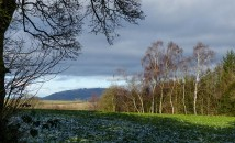 Birches and the Wrekin