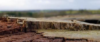 Micro landscape ...