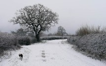 Dog in the lane