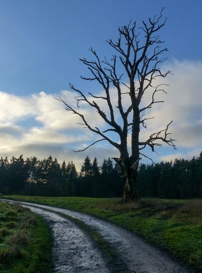 Back to the dead tree