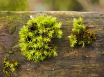 Moss on a gate