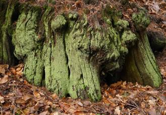 Green stump