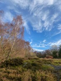 Haycop heather, birch and blue sky