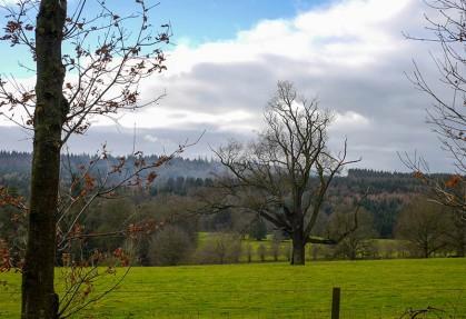 A glimpse of the estate