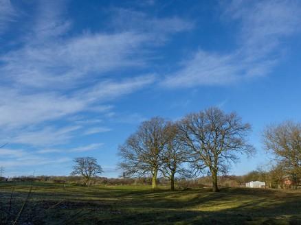 Benthall trees