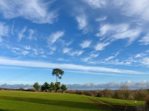 Scots pine and cirrus sky